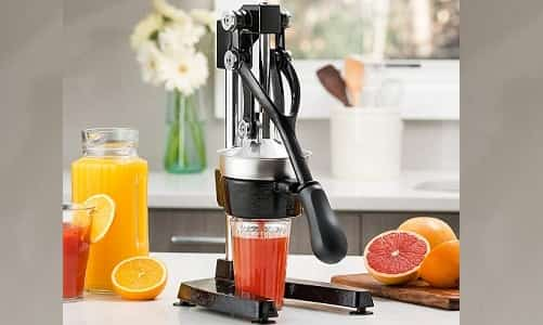10 Best Citrus Juicer 2020 Reviews & Buying Guide